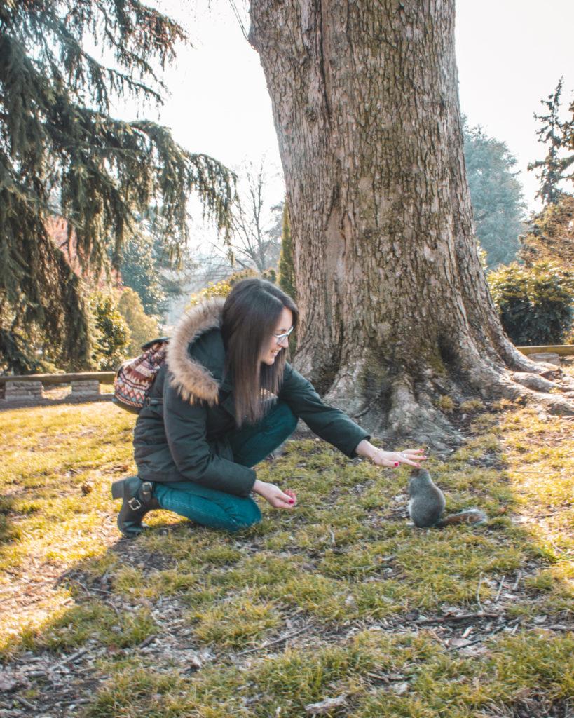 Gli scoiattoli del parco Valentino